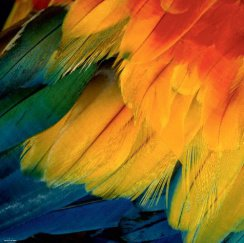 Heye puzzle 1000 db - Feathers